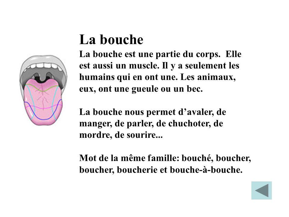 La bouche La bouche est une partie du corps. Elle est aussi un muscle. Il y a seulement les humains qui en ont une. Les animaux, eux, ont une gueule o