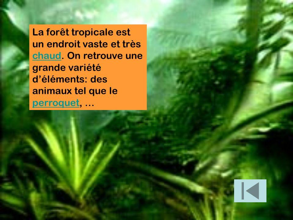 La forêt tropicale est un endroit vaste et très chaud. On retrouve une grande variété déléments: des animaux tel que le perroquet, … chaud perroquet