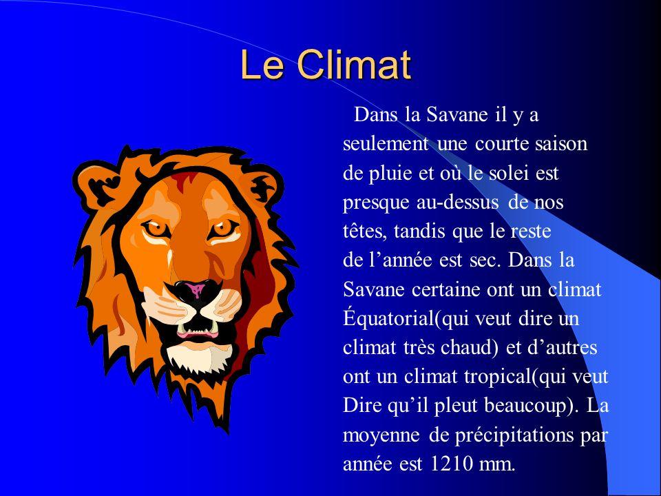 Le Climat Dans la Savane il y a seulement une courte saison de pluie et où le solei est presque au-dessus de nos têtes, tandis que le reste de lannée est sec.