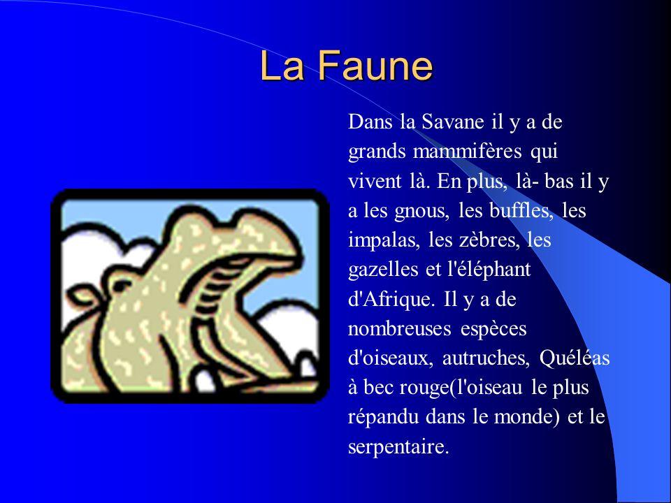 La Faune Dans la Savane il y a de grands mammifères qui vivent là.