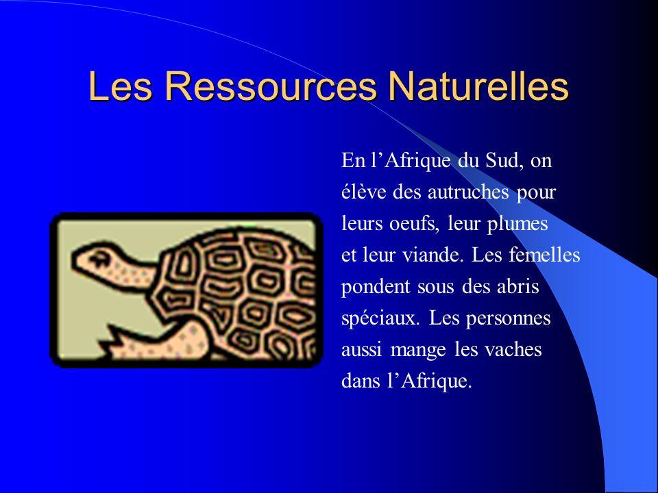Les Ressources Naturelles En lAfrique du Sud, on élève des autruches pour leurs oeufs, leur plumes et leur viande.