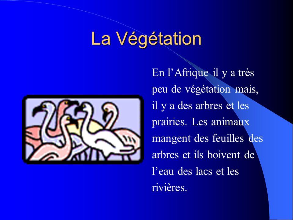 La Végétation En lAfrique il y a très peu de végétation mais, il y a des arbres et les prairies.