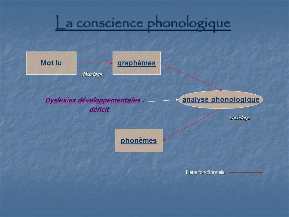 La conscience phonologique Mot lugraphèmes analyse phonologique phonèmes décodage encodage Dyslexies développementales : déficit Liens fonctionnels