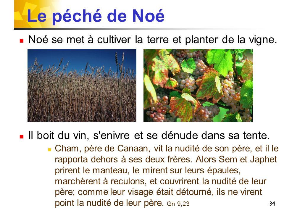 34 Le péché de Noé Noé se met à cultiver la terre et planter de la vigne. Il boit du vin, s'enivre et se dénude dans sa tente. Cham, père de Canaan, v