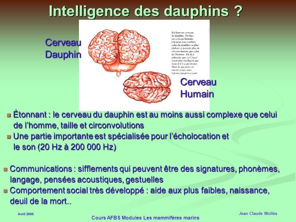 Avril 2006 Cours AFBS Modules Les mammifères marins Echolocation des Odontocètes Avril 2005 Jean Claude Wollès Principe du Bio-sonar Principe du Bio-s