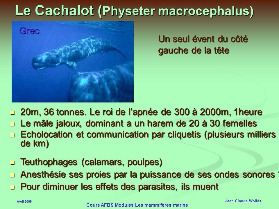 Avril 2006 Cours AFBS Modules Les mammifères marins Dauphin deau douce Avril 2005 Jean Claude Wollès Presque aveugle, pas de cristallin Sonar très eff