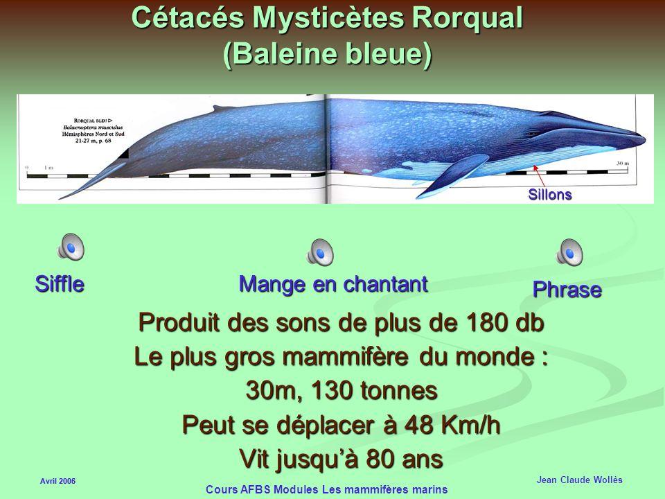 Avril 2006 Cours AFBS Modules Les mammifères marins Les Cétacés Mysticètes (fanons) Deux events Les Mysticètes ont des fanons (dérivés dermiques) Les