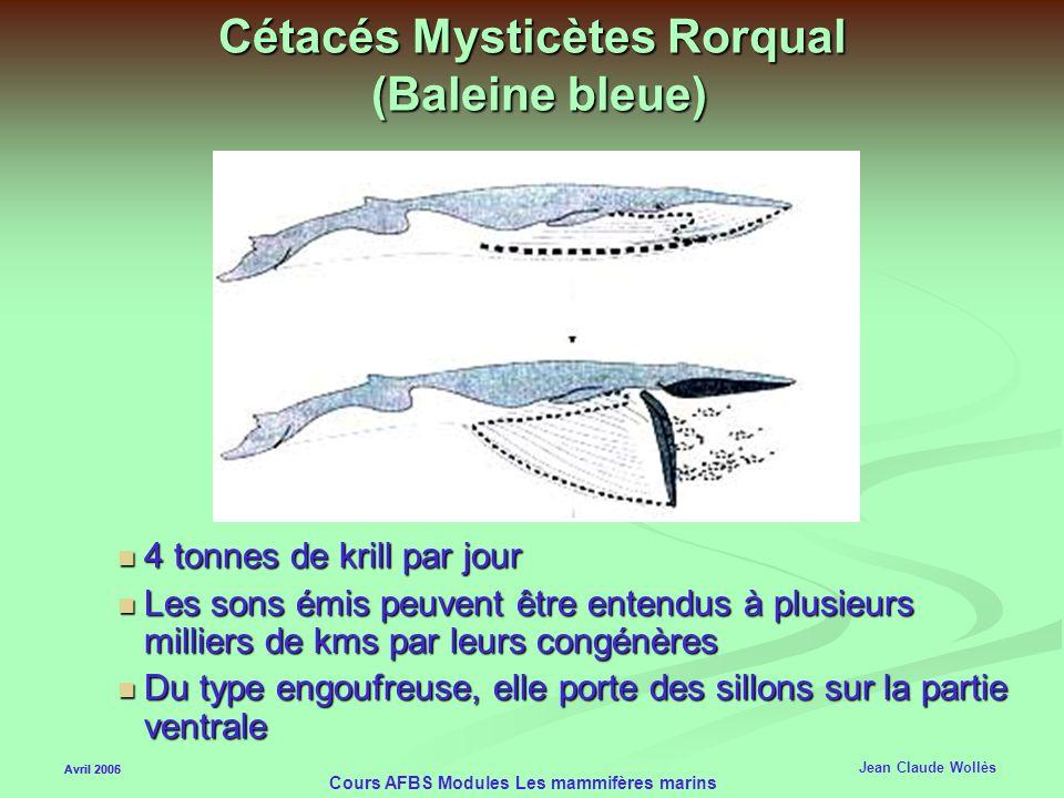 Avril 2006 Cours AFBS Modules Les mammifères marins Cétacés Mysticètes Rorqual (Baleine bleue) Produit des sons de plus de 180 db Le plus gros mammifè