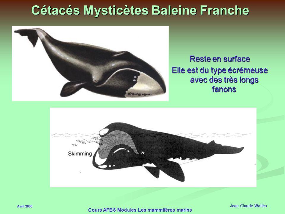 Avril 2006 Cours AFBS Modules Les mammifères marins Cétacés Mysticètes Rorqual (Baleine bleue) 4 tonnes de krill par jour Les sons émis peuvent être e