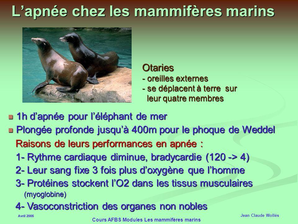 Avril 2006 Cours AFBS Modules Les mammifères marins Les Pinnipèdes (Pieds en forme de palme) Avril 2005 Jean Claude Wollès Mâles polygames Mâles polyg