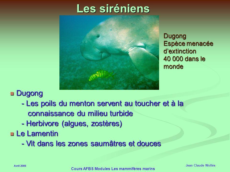 Avril 2006 Cours AFBS Modules Les mammifères marins Lapnée chez le phoque de Wedell Avril 2005 Jean Claude Wollès 10- Acide lactique relâché seulement