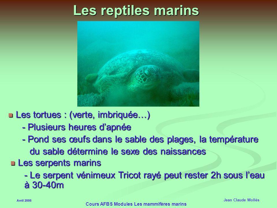 Avril 2006 Cours AFBS Modules Les mammifères marins Les siréniens Avril 2005 Jean Claude Wollès Dugong Dugong - Les poils du menton servent au toucher
