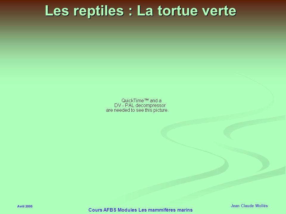 Avril 2006 Cours AFBS Modules Les mammifères marins Les reptiles marins Avril 2005 Jean Claude Wollès Les tortues : (verte, imbriquée…) Les tortues :