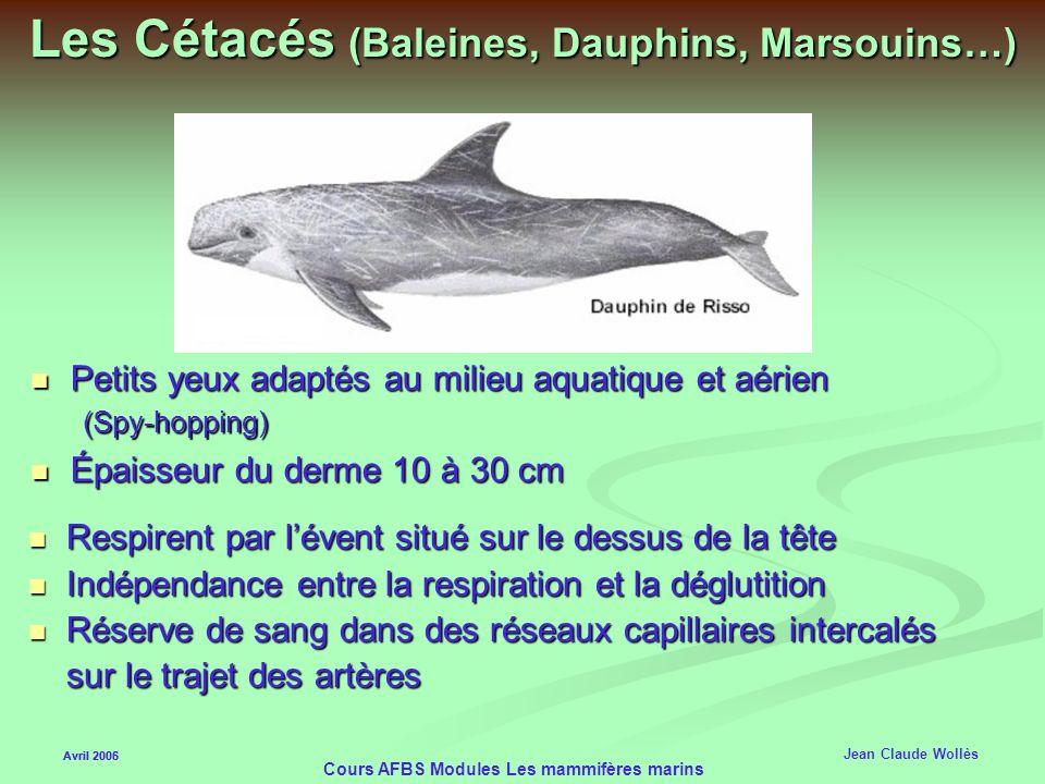 Avril 2006 Cours AFBS Modules Les mammifères marins Les Cétacés (Baleines, Dauphins, Marsouins…) Origines : 33 millions années (vaches, chameaux) Mamm