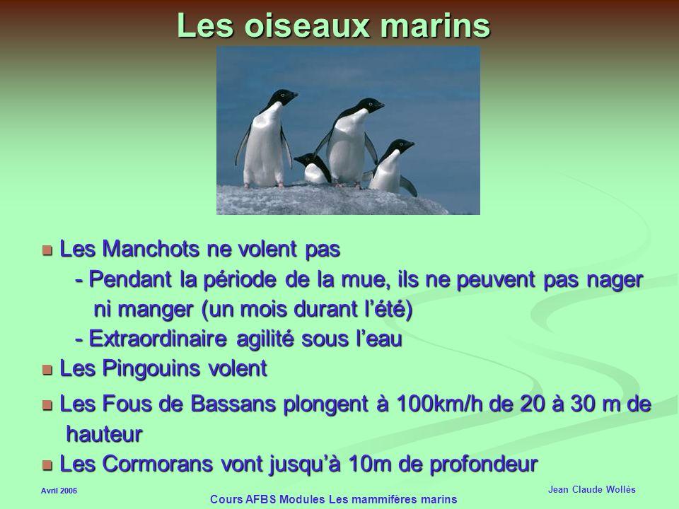 Avril 2006 Cours AFBS Modules Les mammifères marins Les reptiles : La tortue verte Avril 2005 Jean Claude Wollès