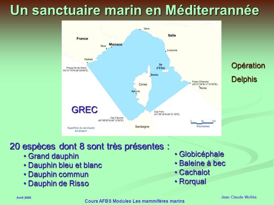 Avril 2006 Cours AFBS Modules Les mammifères marins Les oiseaux marins Avril 2005 Jean Claude Wollès Les Fous de Bassans plongent à 100km/h de 20 à 30