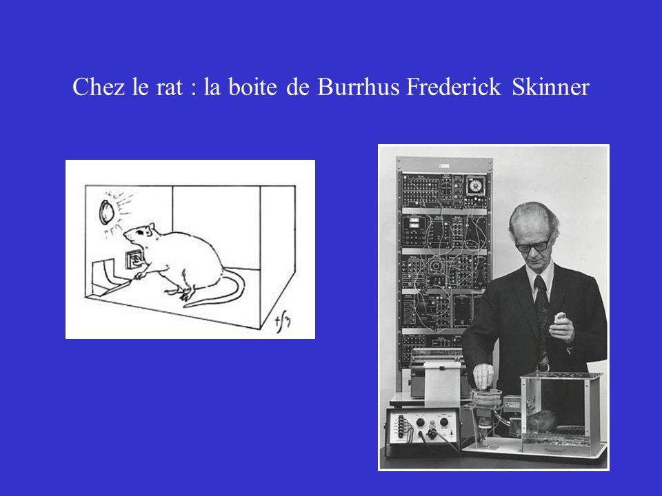 Chez le rat : la boite de Burrhus Frederick Skinner