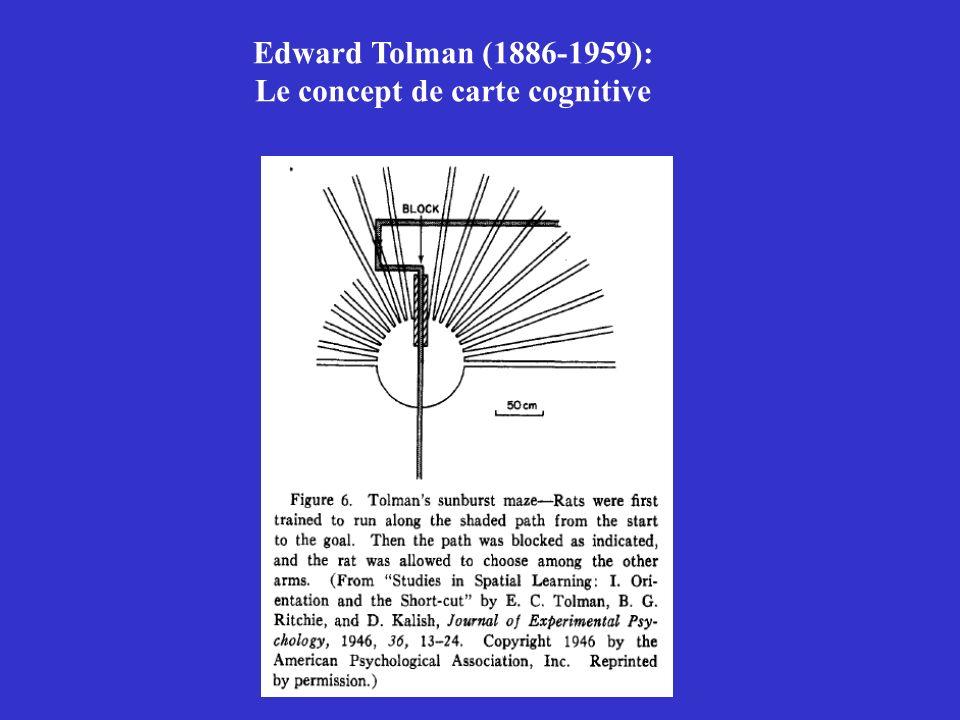Edward Tolman (1886-1959): Le concept de carte cognitive