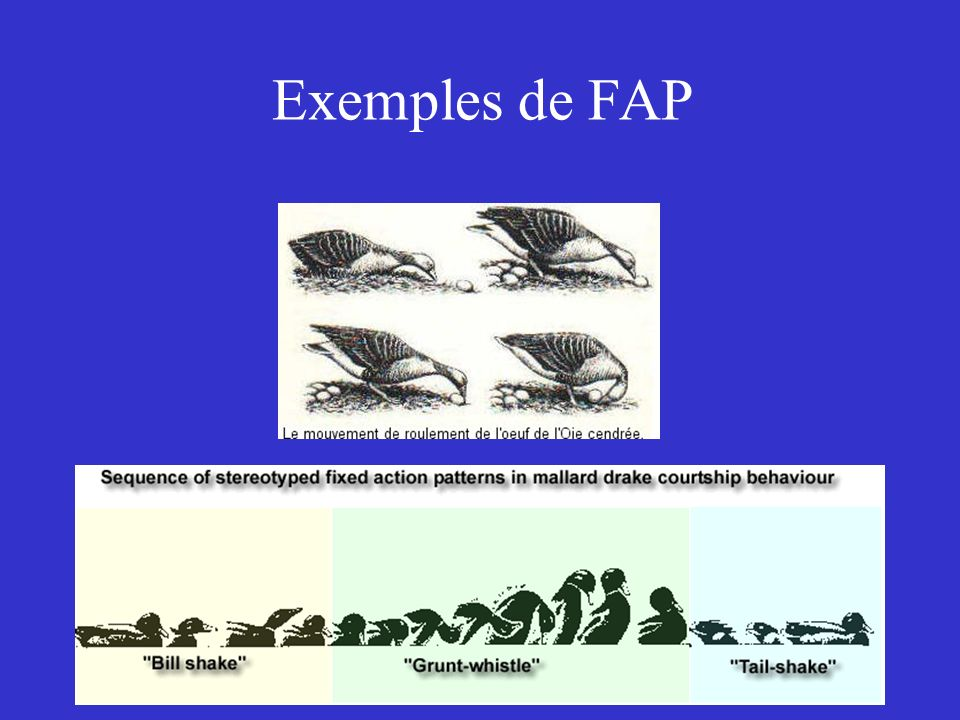 Exemples de FAP