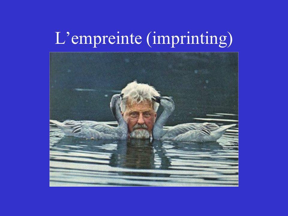 Lempreinte (imprinting)