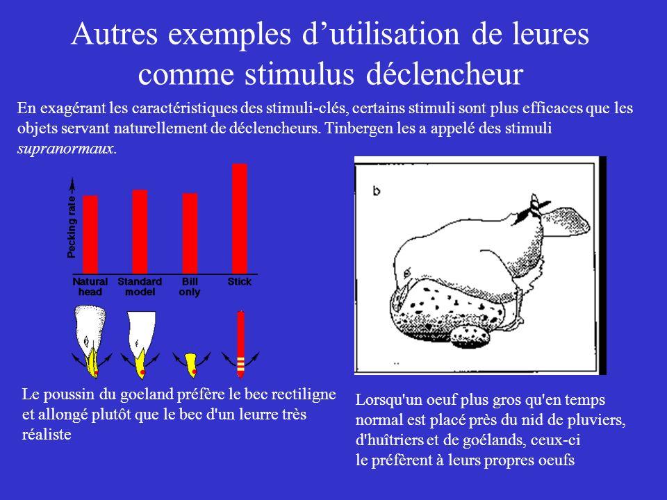 Autres exemples dutilisation de leures comme stimulus déclencheur Le poussin du goeland préfère le bec rectiligne et allongé plutôt que le bec d'un le