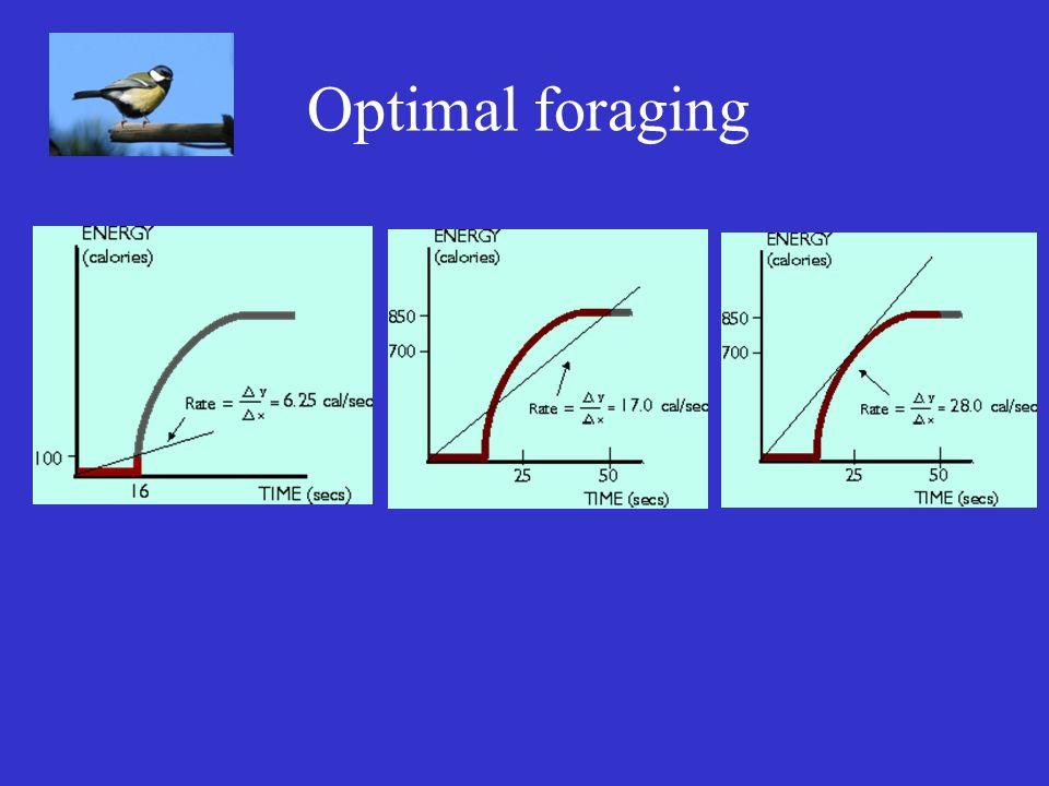 Optimal foraging