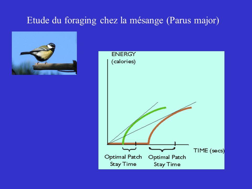 Etude du foraging chez la mésange (Parus major)
