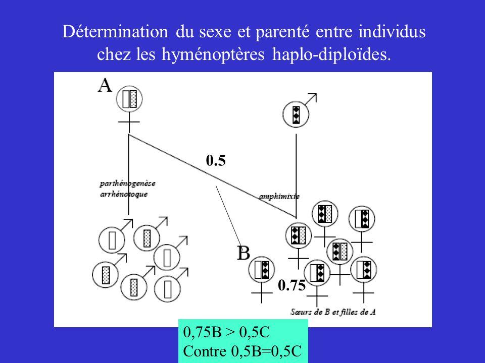 Détermination du sexe et parenté entre individus chez les hyménoptères haplo-diploïdes. 0.5 0.75 0,75B > 0,5C Contre 0,5B=0,5C