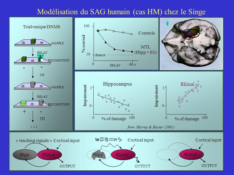 100 50 % correct Controls MTL (Hipp + Rh) 0 DELAY 60 s chance Modélisation du SAG humain (cas HM) chez le Singe % of damage 0100 Rhinal O O O O O O O