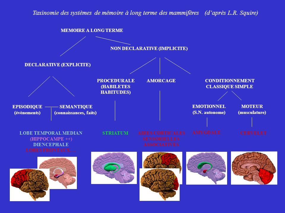 LOBE TEMPORAL MEDIAN (HIPPOCAMPE ++) DIENCEPHALE LOBES FRONTAUX…. SEMANTIQUE (connaissances, faits) EPISODIQUE (évènements) CONDITIONNEMENT CLASSIQUE