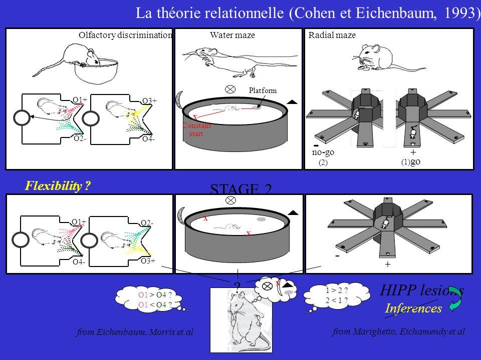 La théorie relationnelle (Cohen et Eichenbaum, 1993) + - no-go (2) (1) go Radial maze Constant start Platform Water maze X O1+ O2- O3+ O4- Olfactory d