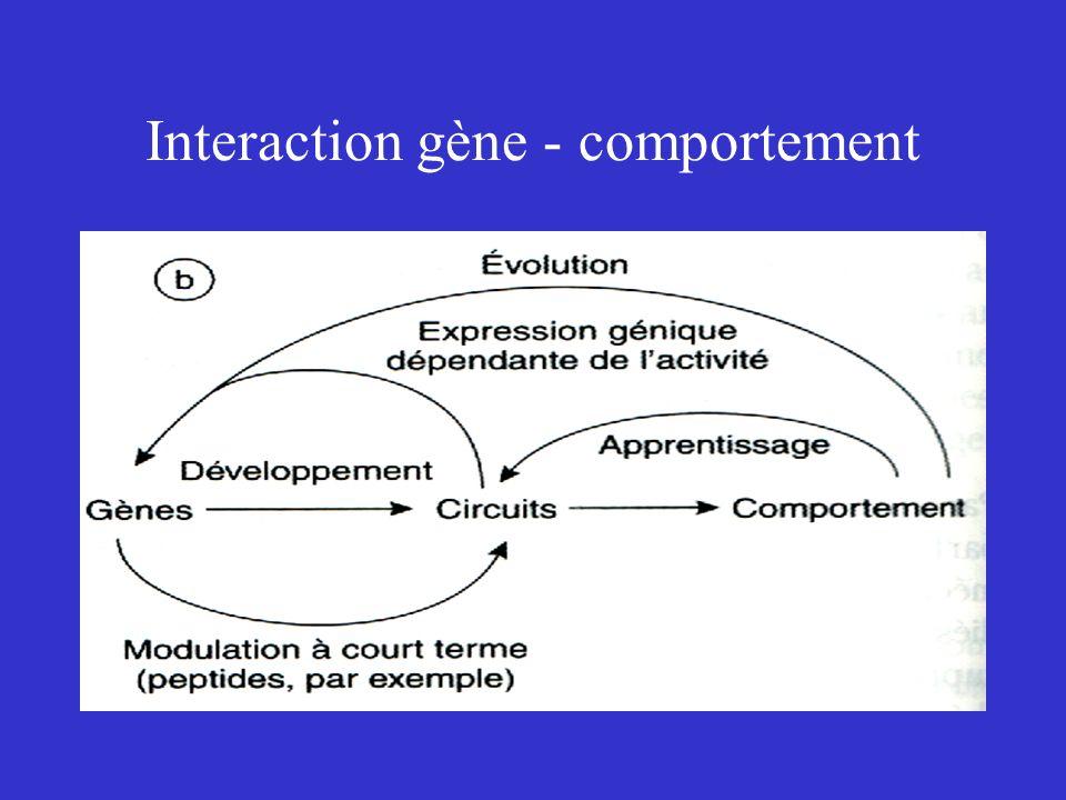 Interaction gène - comportement