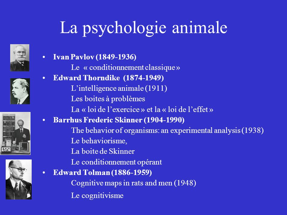 La psychologie animale Ivan Pavlov (1849-1936) Le « conditionnement classique » Edward Thorndike (1874-1949) Lintelligence animale (1911) Les boites à