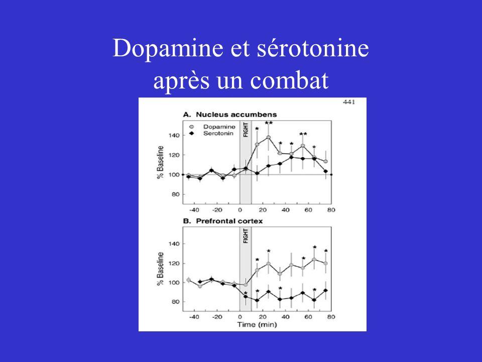 Dopamine et sérotonine après un combat