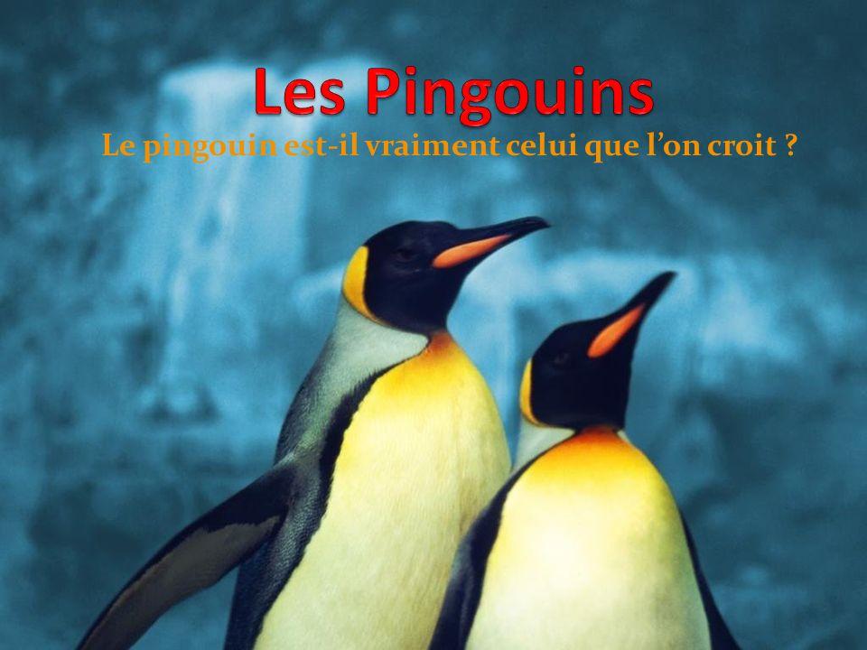 Le pingouin est-il vraiment celui que lon croit ?