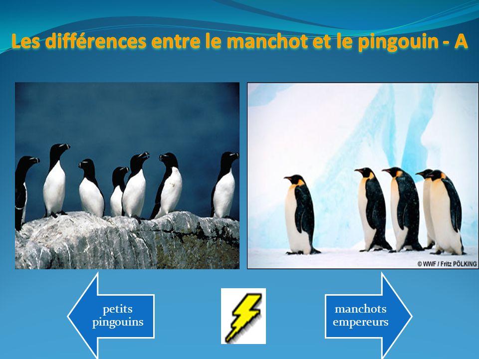 petits pingouins manchots empereurs