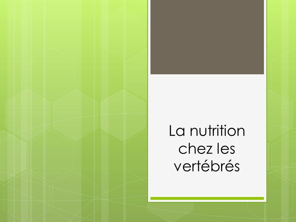 La nutrition chez les vertébrés