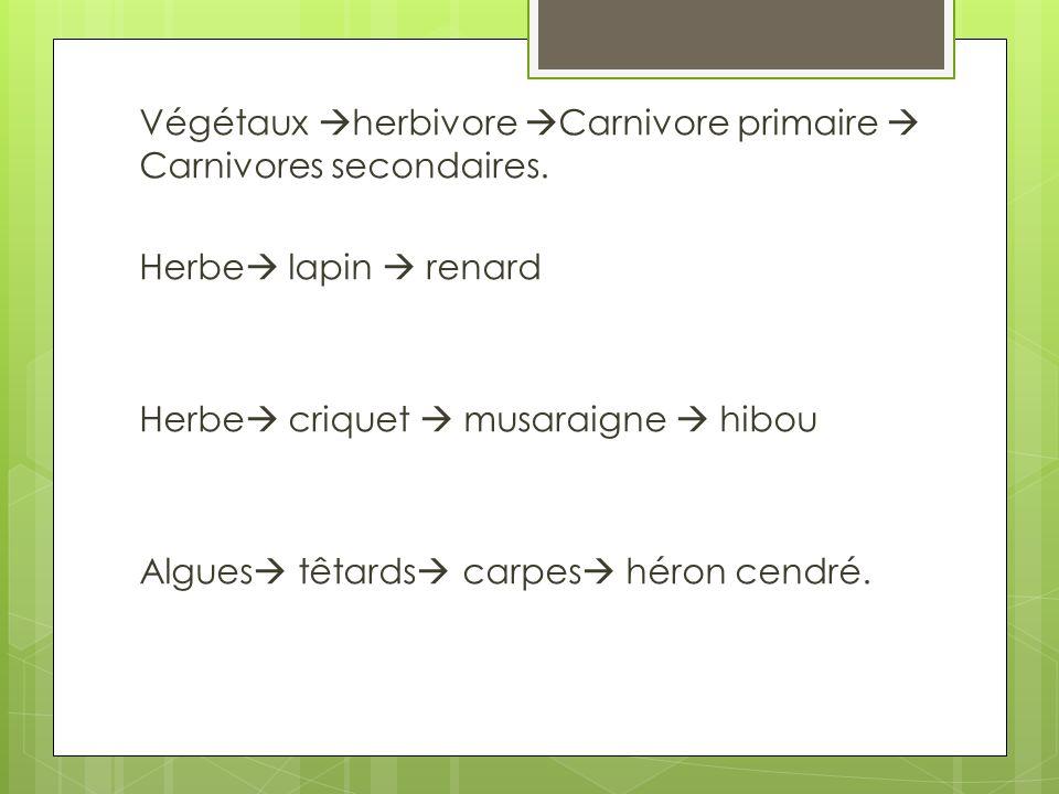 Végétaux herbivore Carnivore primaire Carnivores secondaires. Herbe lapin renard Herbe criquet musaraigne hibou Algues têtards carpes héron cendré.