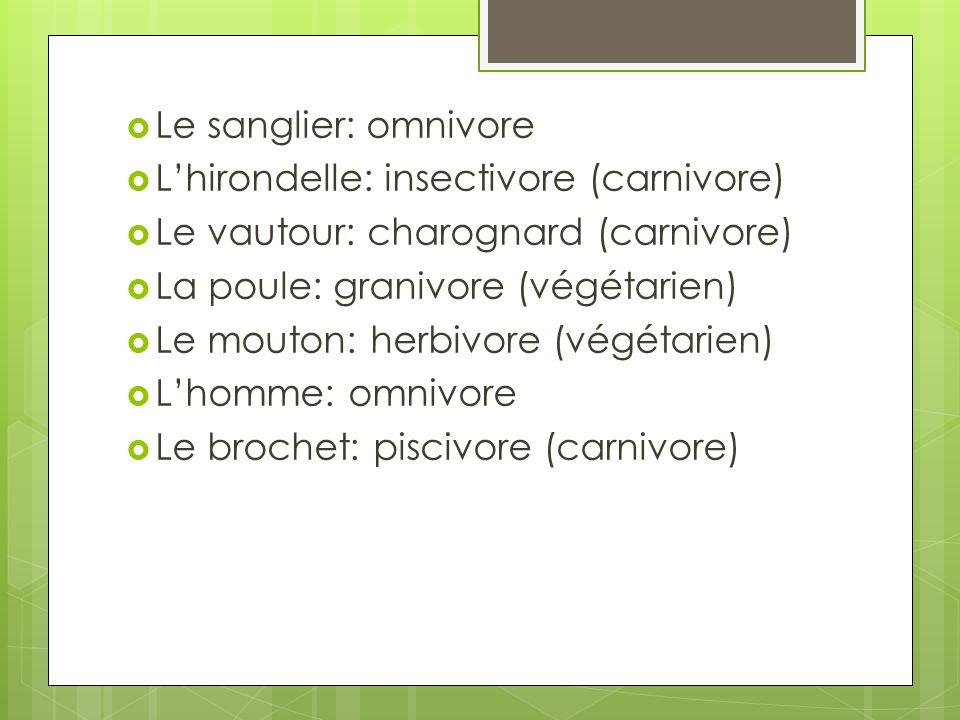 Le sanglier: omnivore Lhirondelle: insectivore (carnivore) Le vautour: charognard (carnivore) La poule: granivore (végétarien) Le mouton: herbivore (v