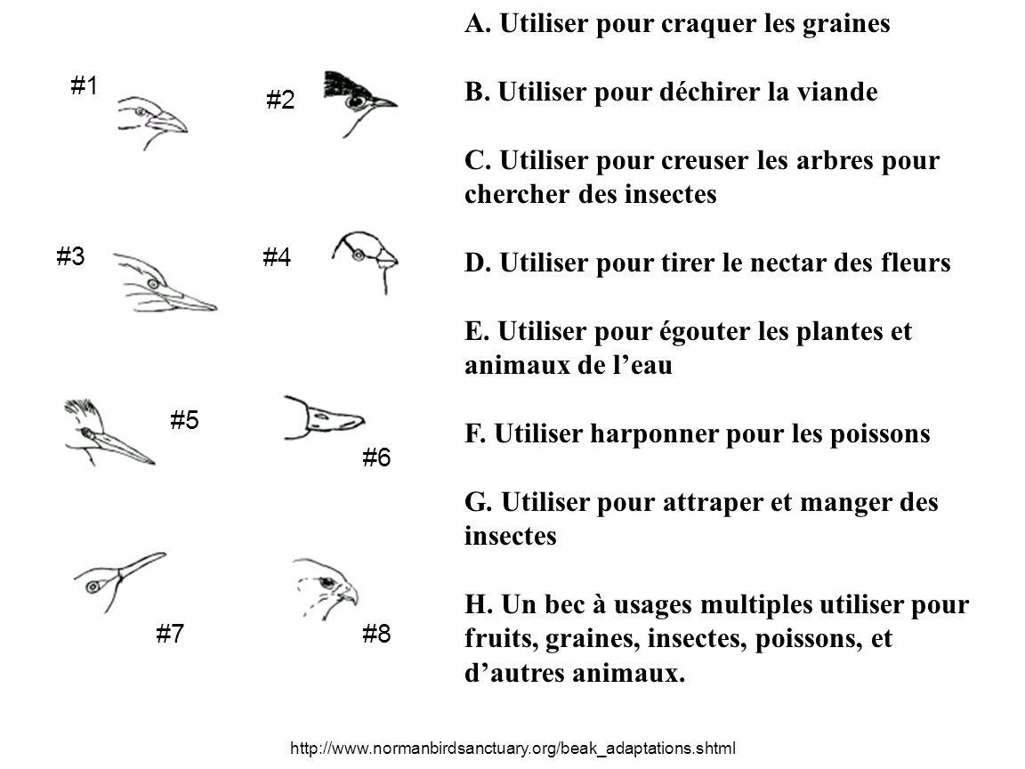 A. Utiliser pour craquer les graines B. Utiliser pour déchirer la viande C.