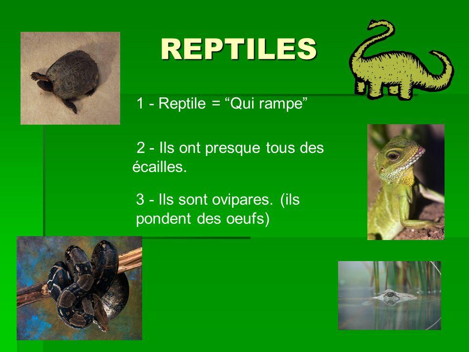 REPTILES 1 - Reptile = Qui rampe 2 - Ils ont presque tous des écailles.