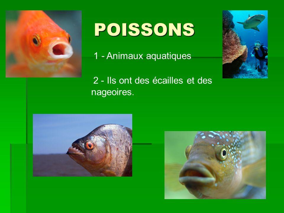 POISSONS 1 - Animaux aquatiques 2 - Ils ont des écailles et des nageoires.