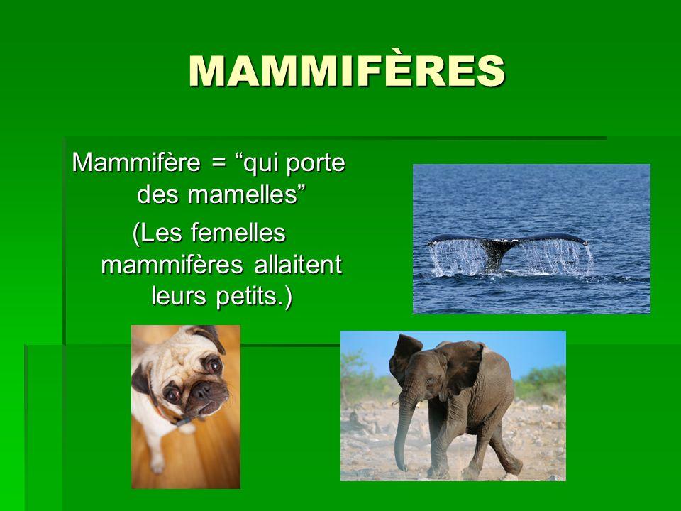 MAMMIFÈRES Mammifère = qui porte des mamelles (Les femelles mammifères allaitent leurs petits.)