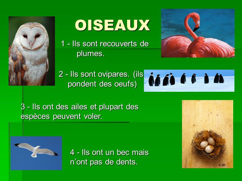OISEAUX 1 - Ils sont recouverts de plumes.2 - Ils sont ovipares.