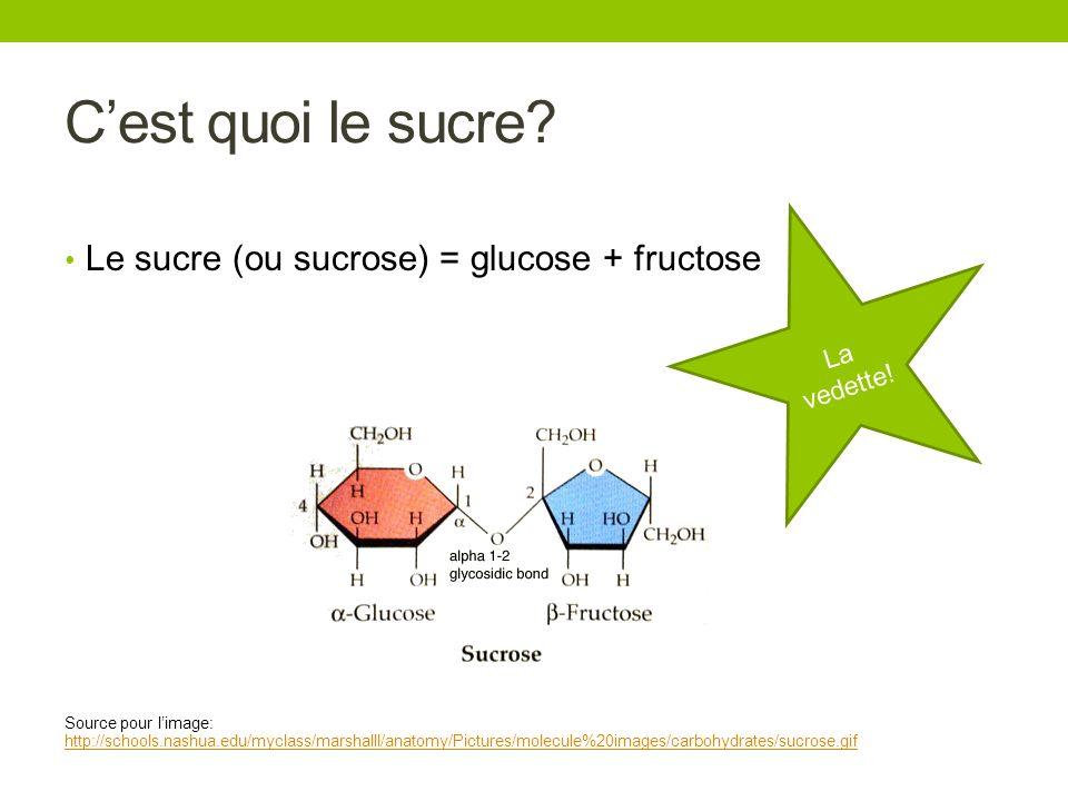 Cest quoi le sucre? Le sucre (ou sucrose) = glucose + fructose Source pour limage: http://schools.nashua.edu/myclass/marshalll/anatomy/Pictures/molecu