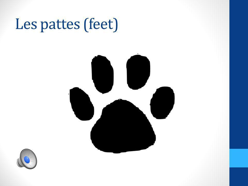 Les jambes (legs)