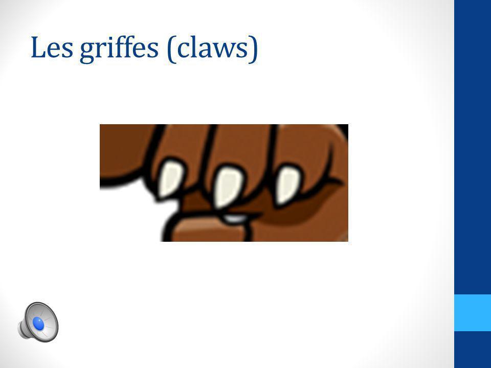 Les bras (arms)