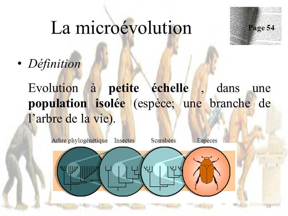 Définition Evolution à petite échelle, dans une population isolée (espèce; une branche de larbre de la vie). La microévolution Page 54 14 Arbre phylog
