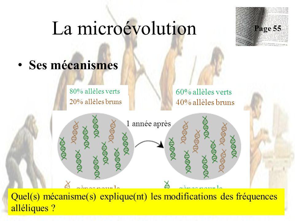 Ses mécanismes La microévolution Page 55 18 80% allèles verts 60% allèles verts 20% allèles bruns 40% allèles bruns gènes pour la coloration brune gèn