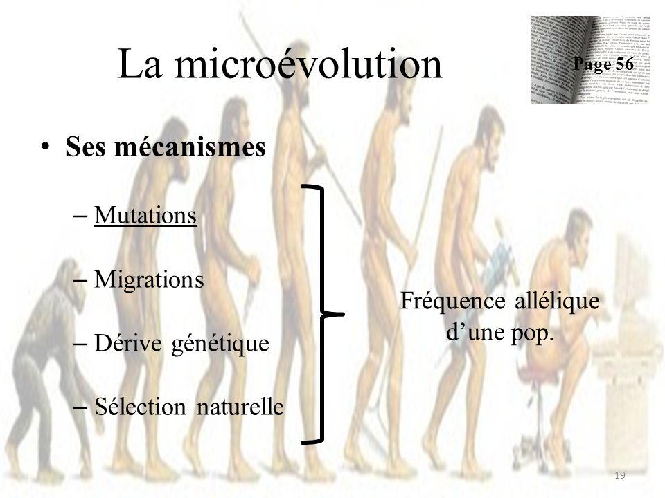 Ses mécanismes – Mutations – Migrations – Dérive génétique – Sélection naturelle La microévolution Page 56 19 Fréquence allélique dune pop.